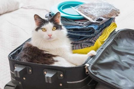 Куда пристроить кошку на время отпуска