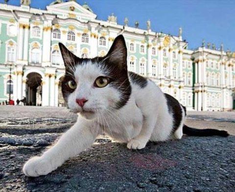 Кто такие эрмитажные коты и как живут