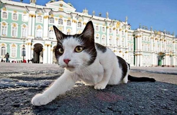 Кто такие эрмитажные коты и как они живут