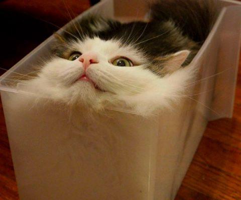 15 доказательств, что коты — это жидкость 🌊🐈