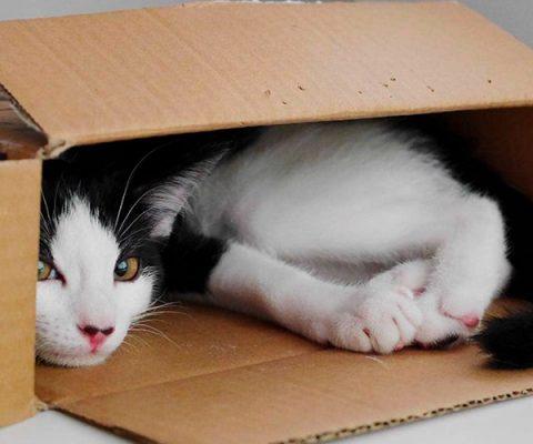 15 фото котиков в коробочках 📦