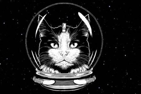 Как кошка в космос летала