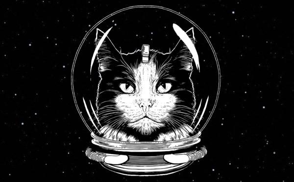Кот Феликс стал космонавтом