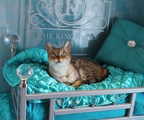 В Италии открылся пятизвездочный кошачий отель