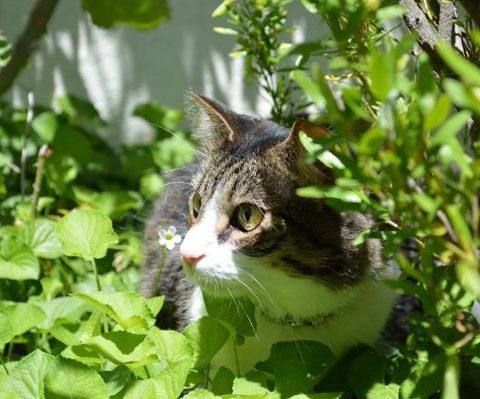 В новозеландской деревне запретили кошек