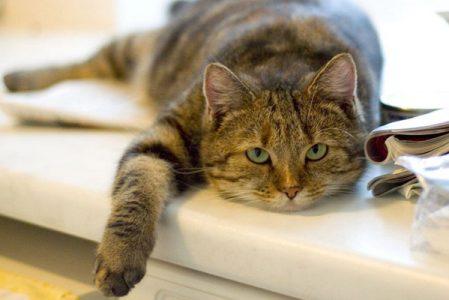Что делать, если кот не ест