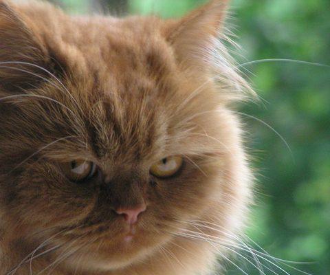 Что делать, если кот обиделся