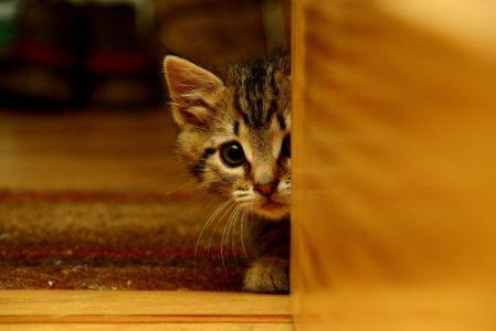 Первые дни котёнка в новом доме