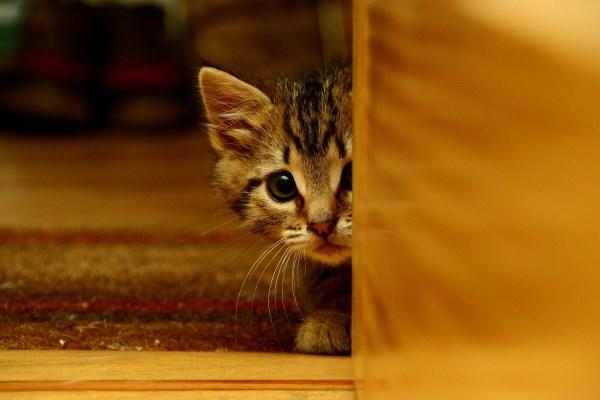 Котенок в первые дни дома