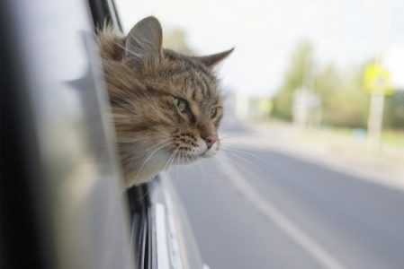 Одноглазая кошка вышла погулять и прошла 370 км