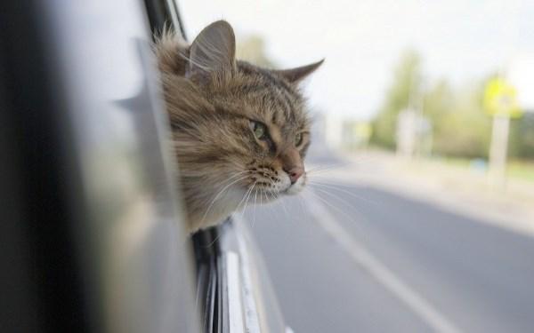 Кошка проехала 370 км