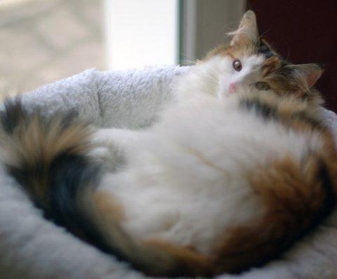 Беременность кошек