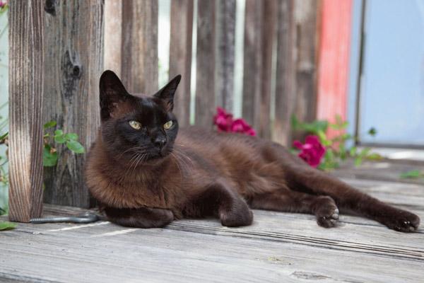 Кот на фоне забора