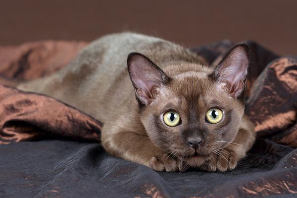 Серый плюшевый кот