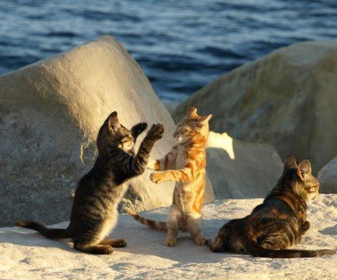 На Кипре оборудовали пункты для кормления кошек