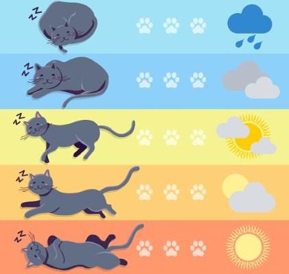 Предсказание погоды по кошке