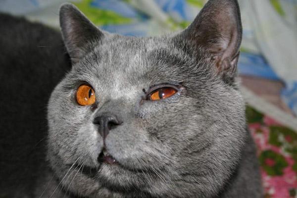 больные глаза у кота