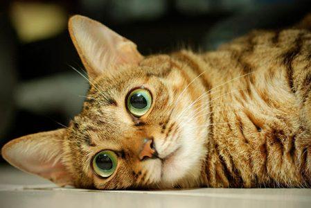 Как ухаживать заглазами кота