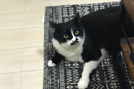 Поющий «кот-грузин» стал звездой интернета