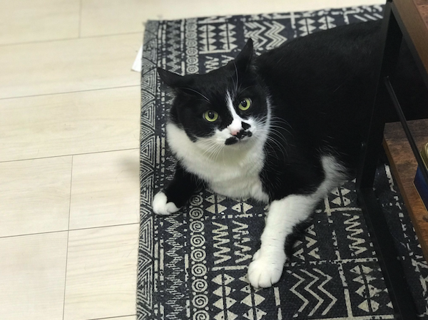 поющий кот грузин звезда интернета