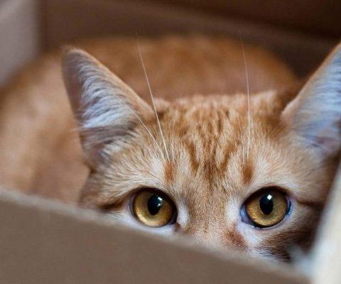 Кота случайно отправили попочте вКанаде