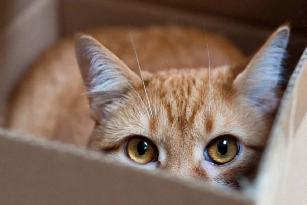 Кота отправили посылкой в Монреаль