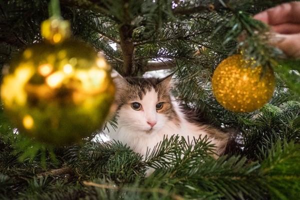 Кошка сидит на новогодней ёлке