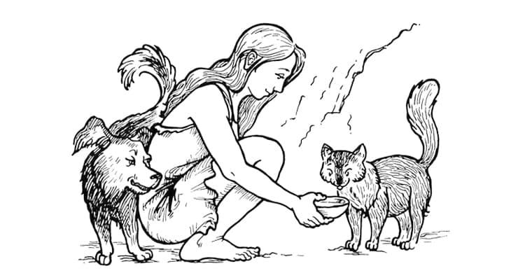 одомашнивание диких кошек и собак