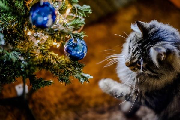 Кошка играет с ёлкой