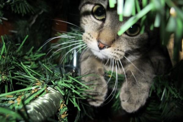 Кошка исследует елку без украшений