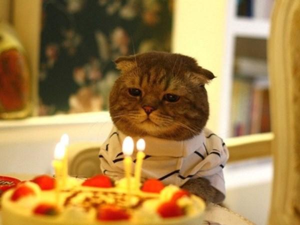 Как перевести кошачий возраст в человеческий