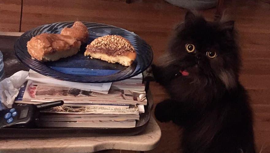 Черный кот ворует пончик