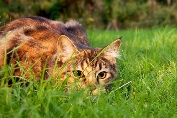 Молодой кот вышел на охоту