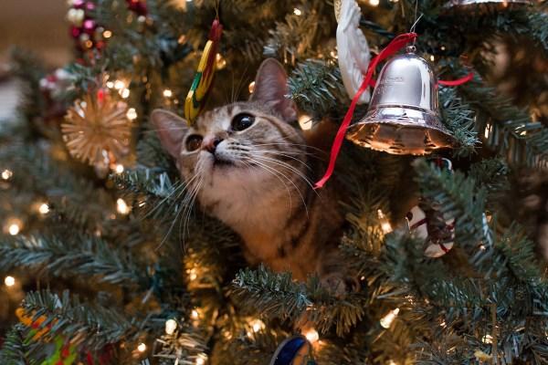 Кот играется на ёлке