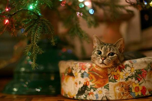 Кот спокойно лежит у елочки