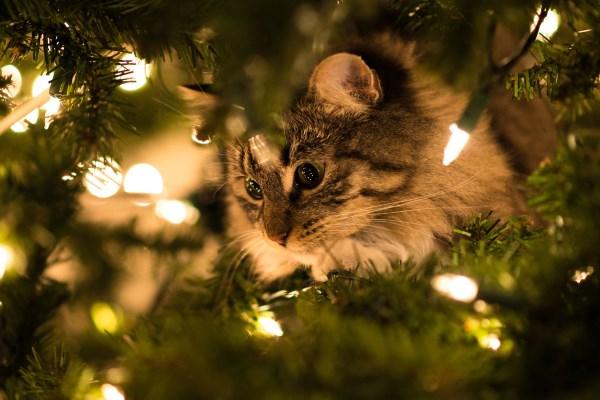 Кошка смотрит на рождественскую гирлянду