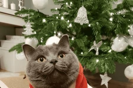 Новогодние коты: подборка из 10 фото 🎄