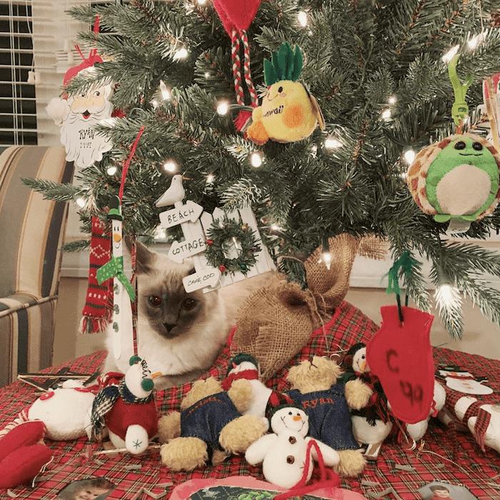 кошка среди подарков под елкой