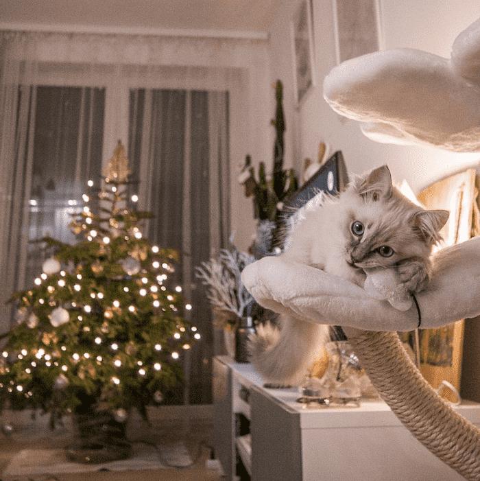 милая новогодняя кошка