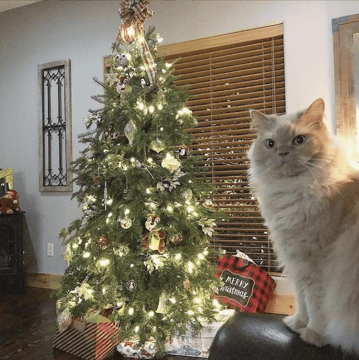 кот не любит елку
