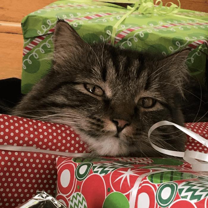 кот любит подарки