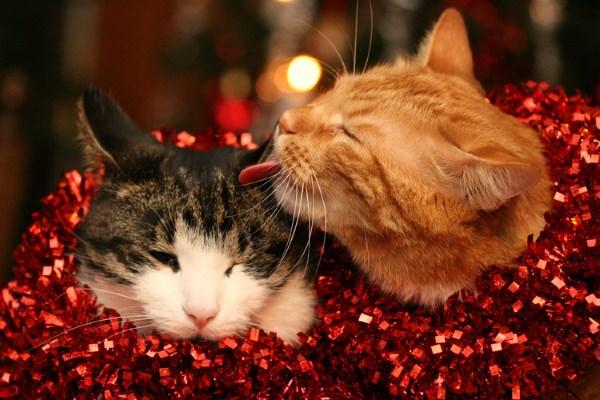 Два кота в мишуре
