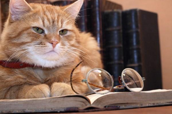 Старый и мудрый кот читает книгу