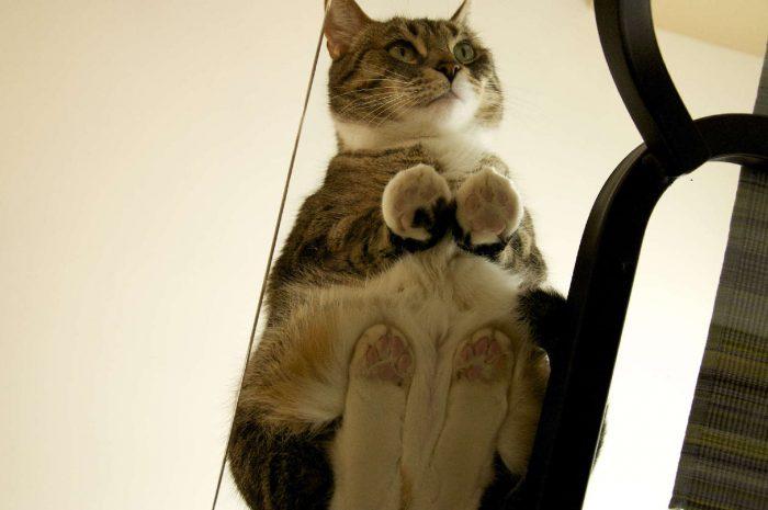 коты лежат на стеклянном столе