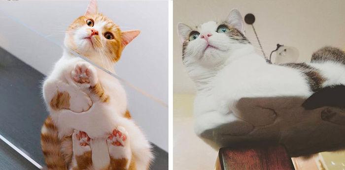коты на стеклянном столе