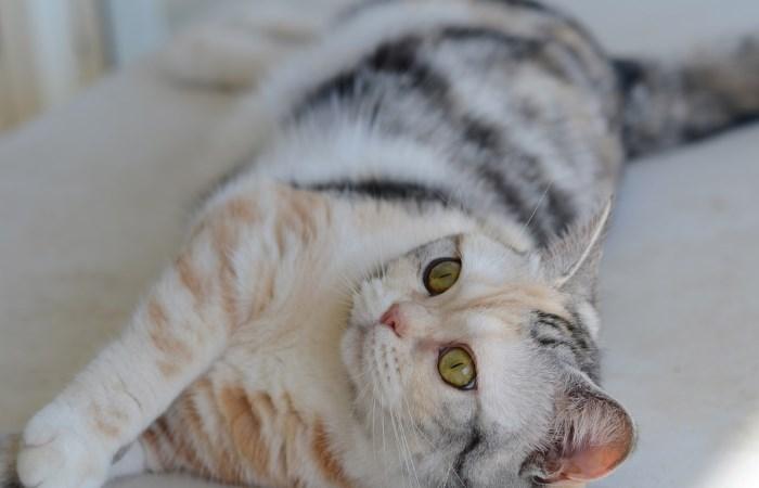 Кошка трехцветного окраса лежит на солнышке