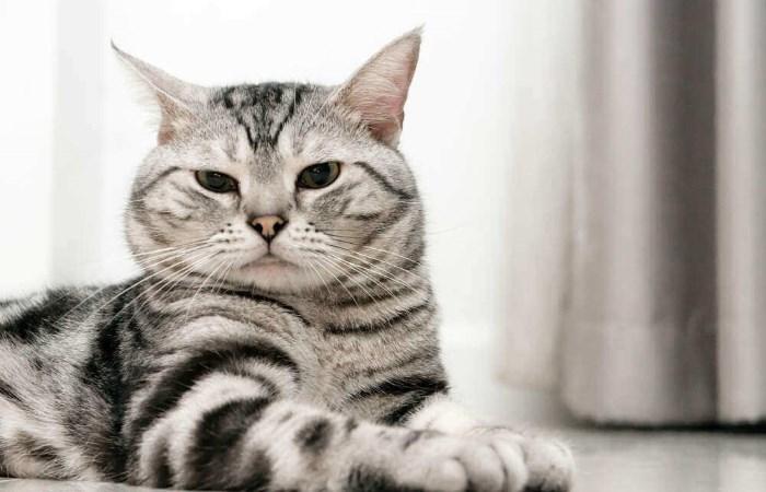 Кошка щурится