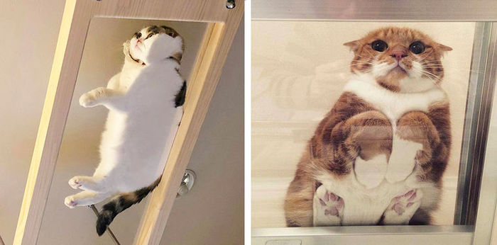 коты на стеклянном столе вид снизу