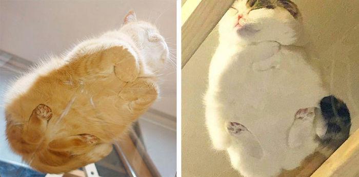 коты на стеклянном столе фото