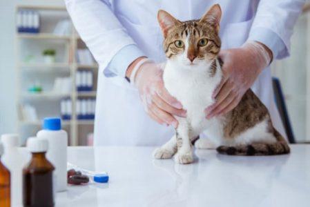 Домашняя аптечка для кота